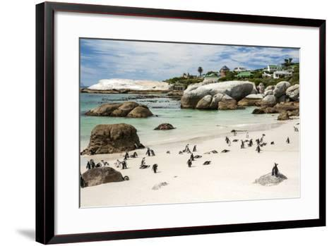 African Penguins on Sand at Foxy Beach with Residential Homes in Background-Kimberly Walker-Framed Art Print