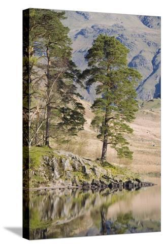 Early Morning Reflections, Blea Tarn, Above Little Langdale-Ruth Tomlinson-Stretched Canvas Print