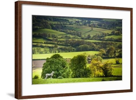 Lamb in Spring, Winchcombe, the Cotswolds, Gloucestershire, England, United Kingdom, Europe-Matthew Williams-Ellis-Framed Art Print