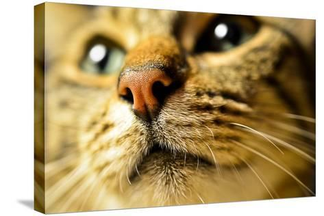 Tiger Cat Nose-Volanthevist-Stretched Canvas Print