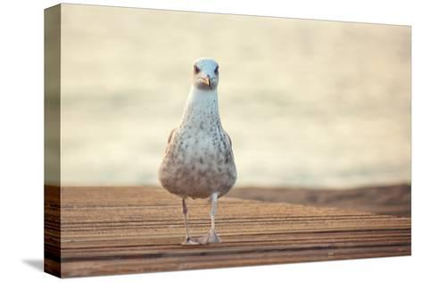Seagull-by Juanedc-Stretched Canvas Print