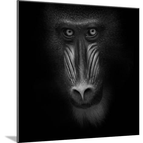 Eye Contact-Ruud Peters-Mounted Photographic Print