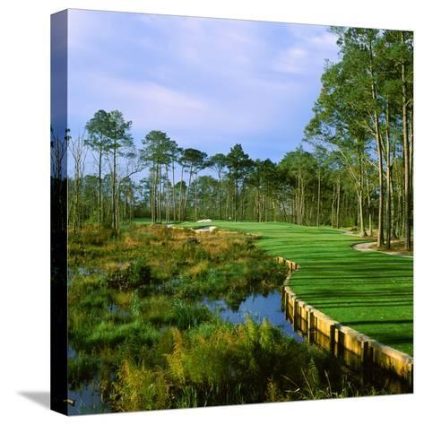 Trees in a Golf Course, Kilmarlic Golf Club, Powells Point, Currituck County, North Carolina, USA--Stretched Canvas Print