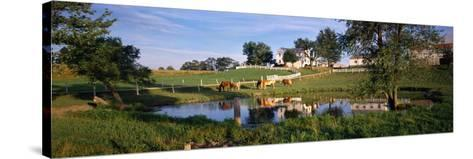 Horses Grazing at a Farm, Amish Country, Indiana, USA--Stretched Canvas Print