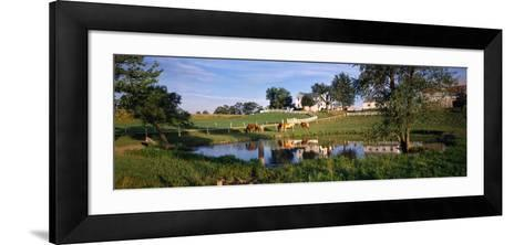 Horses Grazing at a Farm, Amish Country, Indiana, USA--Framed Art Print