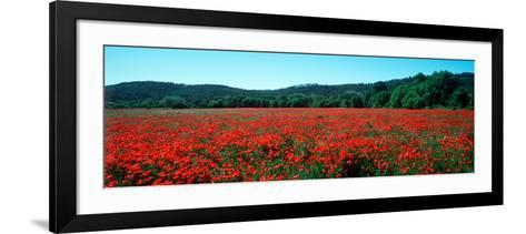 Poppies Field in Spring, Provence-Alpes-Cote D'Azur, France--Framed Art Print