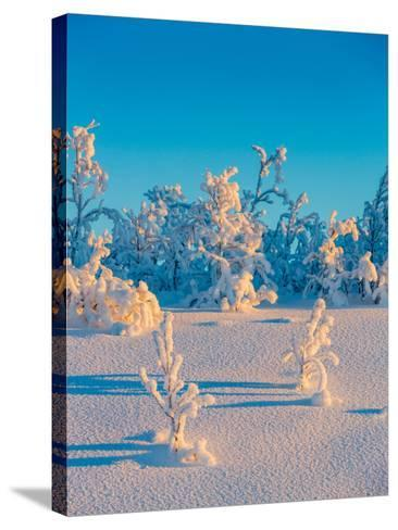 Cold Winter in Lapland Sweden with Temperatures -47 Celsius--Stretched Canvas Print