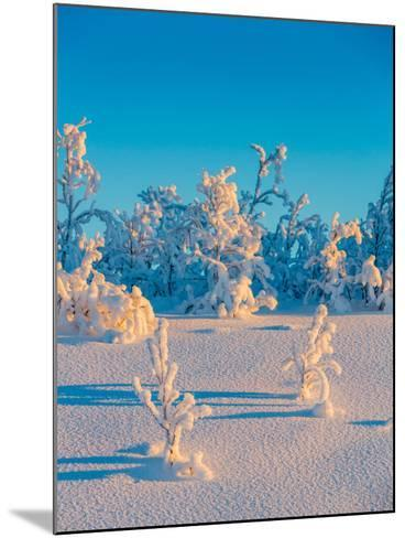Cold Winter in Lapland Sweden with Temperatures -47 Celsius--Mounted Photographic Print