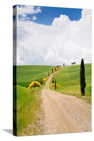 Path with Cypress Trees in Field, San Quirico D'Orcia, Val D'Orcia, Siena Province, Tuscany, Italy--Stretched Canvas Print