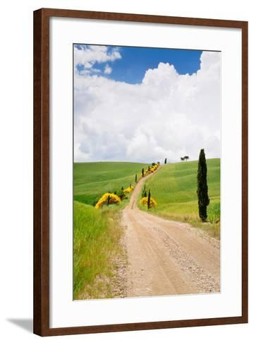 Path with Cypress Trees in Field, San Quirico D'Orcia, Val D'Orcia, Siena Province, Tuscany, Italy--Framed Art Print