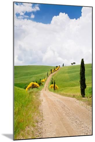 Path with Cypress Trees in Field, San Quirico D'Orcia, Val D'Orcia, Siena Province, Tuscany, Italy--Mounted Photographic Print