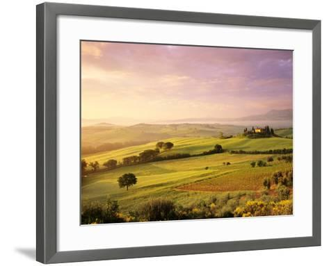 Trees in a Field at Sunrise, Villa Belvedere, Val D'Orcia, Siena Province, Tuscany, Italy--Framed Art Print