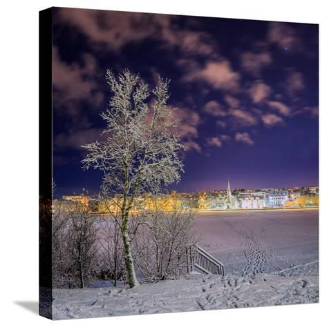 Snow Covered Trees and Frozen Pond, Reykjavik, Iceland--Stretched Canvas Print