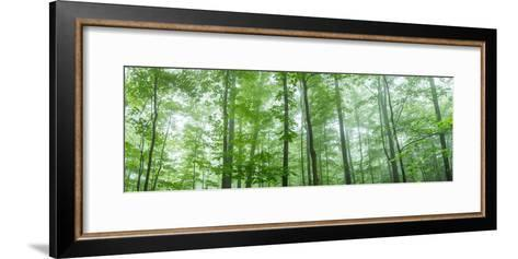 Trees in a Forest, Hamburg, New York State, USA--Framed Art Print