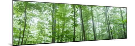 Trees in a Forest, Hamburg, New York State, USA--Mounted Photographic Print