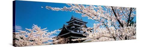 Matsue Castle Cherry Blossoms Shimane Japan--Stretched Canvas Print