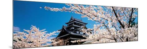 Matsue Castle Cherry Blossoms Shimane Japan--Mounted Photographic Print