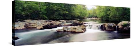 Middle Prong of Little Pigeon River, Great Smoky Mountains National Park, Sevier County--Stretched Canvas Print