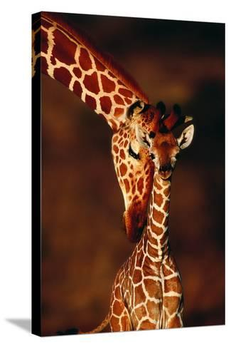 Giraffe and Baby-Lantern Press-Stretched Canvas Print