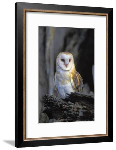 Barn Owl-Lantern Press-Framed Art Print