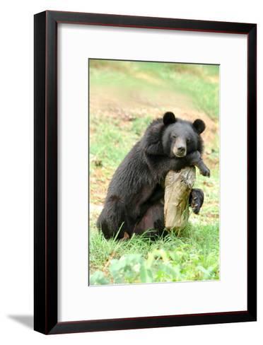 Moon Bear-Lantern Press-Framed Art Print