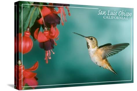 San Luis Obispo, California - Rufous Hummingbirds-Lantern Press-Stretched Canvas Print
