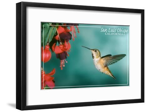 San Luis Obispo, California - Rufous Hummingbirds-Lantern Press-Framed Art Print