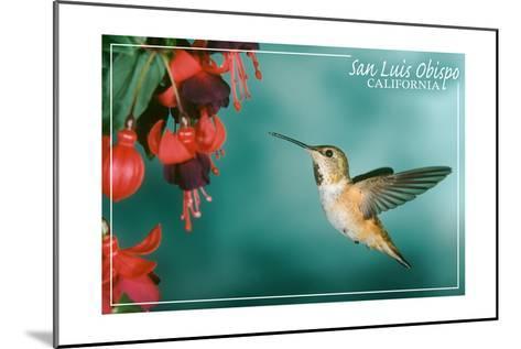 San Luis Obispo, California - Rufous Hummingbirds-Lantern Press-Mounted Art Print