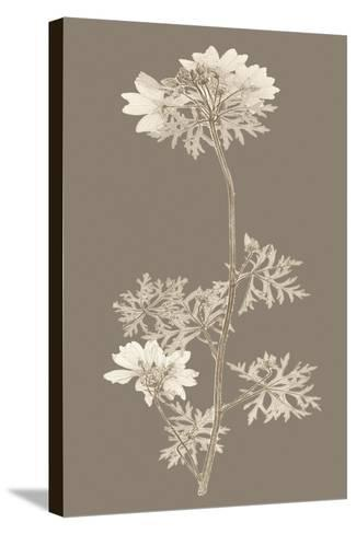 Taupe Nature Study II-Vision Studio-Stretched Canvas Print