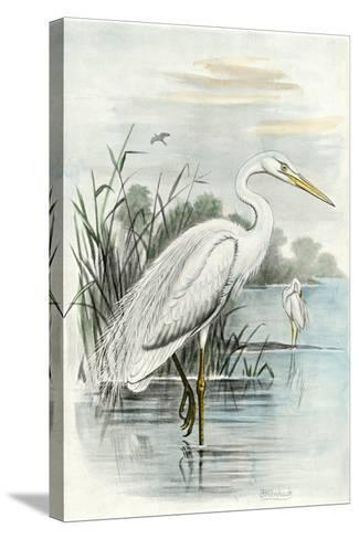 Oversize White Heron--Stretched Canvas Print