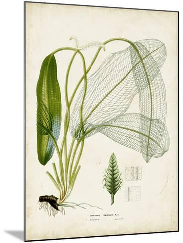 Tropical Grass II-Vision Studio-Mounted Art Print