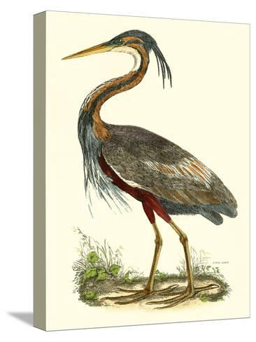 Purple Heron-John Selby-Stretched Canvas Print