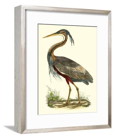 Purple Heron-John Selby-Framed Art Print