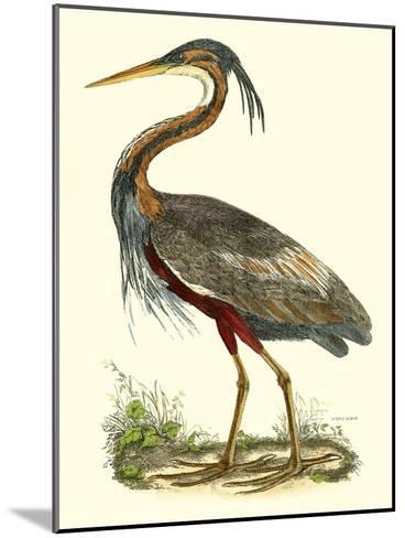 Purple Heron-John Selby-Mounted Art Print