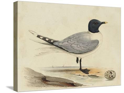 Meyer Shorebirds I-H^ l^ Meyer-Stretched Canvas Print