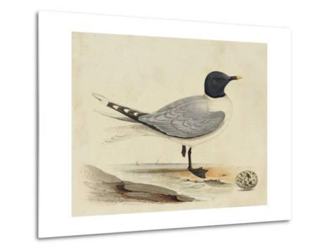 Meyer Shorebirds I-H^ l^ Meyer-Metal Print