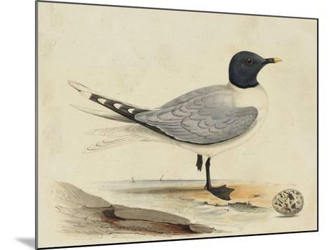 Meyer Shorebirds I-H^ l^ Meyer-Mounted Art Print