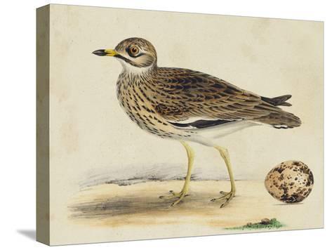 Meyer Shorebirds IV-H^ l^ Meyer-Stretched Canvas Print