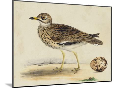 Meyer Shorebirds IV-H^ l^ Meyer-Mounted Art Print