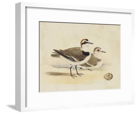 Meyer Shorebirds V-H^ l^ Meyer-Framed Art Print