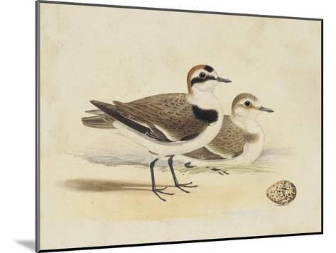 Meyer Shorebirds V-H^ l^ Meyer-Mounted Art Print