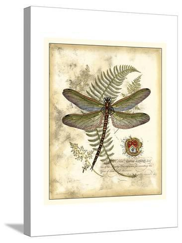 Regal Dragonfly I-Vision Studio-Stretched Canvas Print