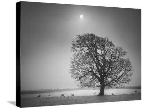 Evening Light II-Martin Henson-Stretched Canvas Print