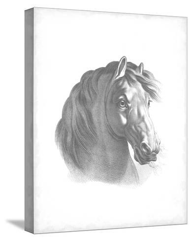 Equestrian Blueprint II-Vision Studio-Stretched Canvas Print