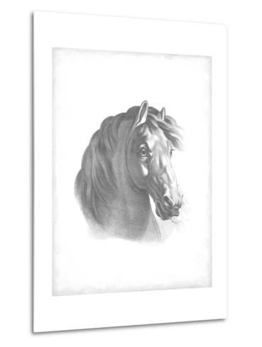Equestrian Blueprint II-Vision Studio-Metal Print