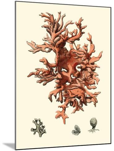 Red Coral III-Vision Studio-Mounted Art Print