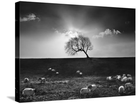 The Gathering-Martin Henson-Stretched Canvas Print