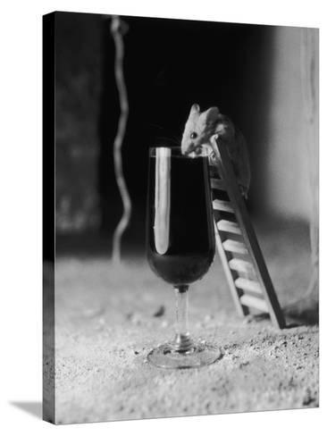 Soused Mouse-Charles Hewitt-Stretched Canvas Print