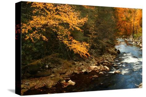 Golden foliage reflected in mountain creek, Smoky Mountain National Park, Tennessee, USA-Anna Miller-Stretched Canvas Print