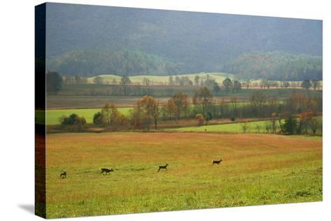 Autumn in Cades Cove, Smoky Mountains National Park, Tennessee, USA-Anna Miller-Stretched Canvas Print